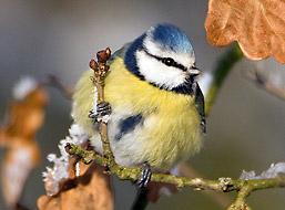 Het is weer tijd om tuinvogels te tellen!