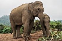 Samen beschermen we dieren wereldwijd
