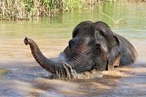 Businessmodel voor olifantvriendelijk toerisme