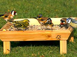 Extra korting op vogels voeren