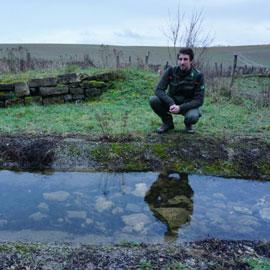 Extra poelen in Limburg voor padden