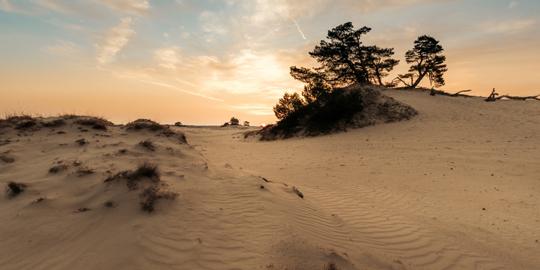 Woestijn in Nederland
