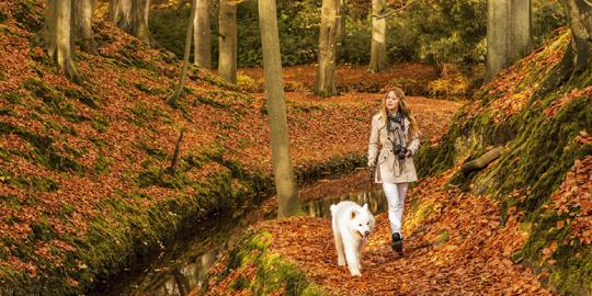 De mooiste boswachterspaden voor de herfst